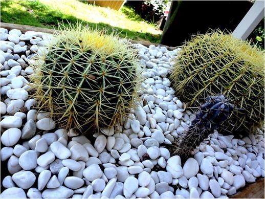 5 - Jardines con cactus y piedras ...