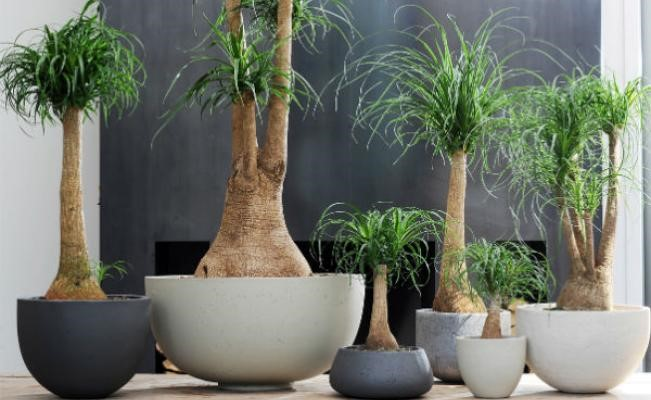1 for Plantas decorativas de interior con poca luz